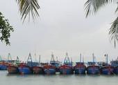 Phú Yên gọi điện đến từng nhà để sơ tán dân tránh bão số 6