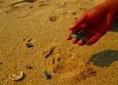 Bình Thuận yêu cầu làm rõ dầu vón cục trôi vào bờ biển