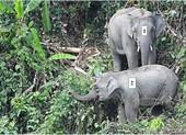 Phát hiện 1 voi con khoảng 1 tuổi