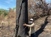 Quảng Nam: BQL rừng phòng hộ đốt thực bì, đốt cả rừng tự nhiên
