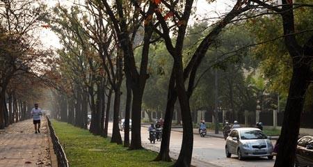 chặt cây, Hà Nội, cây xanh, đô thị, quy hoạch