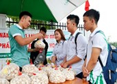 Sinh viên bán hành, tỏi giúp bà con nông dân Lý Sơn
