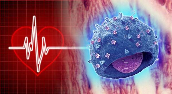 Ký ức trong tế bào: Các nhà nghiên cứu đưa ra giả thuyết cho rằng sự thay đổi trong tính cách của người nhận tạng cấy ghép là do ký ức đã được lưu trữ trong các tế bào. (Ảnh: photos.com)