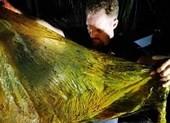 Cá voi con chết thảm vì nuốt 40kg rác thải nhựa