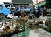 Trung Quốc xem xét cấm buôn bán, tiêu thụ động vật hoang dã