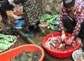 Trung Quốc siết buôn bán động vật hoang dã, ngăn virus Corona