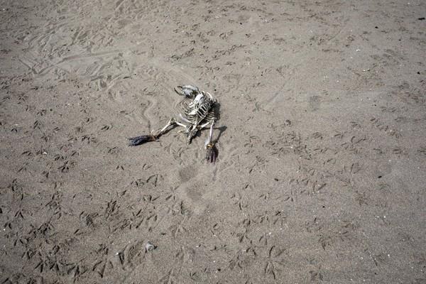 ừ bãi biển đông nghịt người hôm 16-2, Agua Dulce trong ngày 24-3 chỉ còn đầy dấu chân mòng biển, cùng bộ xương chim biển bị sóng đánh dạt vào vẫn chưa được thu dọn. Ảnh: AP 2