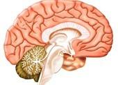 Điều trị hệ thần kinh có thể giúp chữa viêm phổi như COVID-19