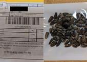 Hạt giống gửi từ Trung Quốc chứa cỏ dại độc hại và ấu trùng bọ