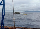 Bị tàu Trung Quốc tông trúng, 14 ngư dân Philippines mất tích