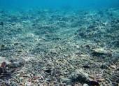 Biển Đông: Báo động nguồn cá và san hô vì hoạt động Trung Quốc
