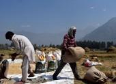 Việt Nam lần đầu tiên mua gạo của Ấn Độ