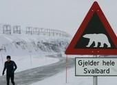 Tử vong khi đi cắm trại vì bị gấu Bắc Cực tấn công