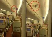 Máy bay Ấn Độ quay đầu giữa trời vì phát hiện dơi trong cabin