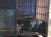 Lãnh 30 tháng tù vì nuôi nhốt động vật hoang dã trái phép
