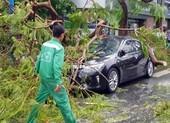 Cần Thơ: Giông lốc làm cây xanh ngã đổ, 9 ô tô hư hỏng nặng