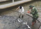 Nhức nhối cá tầm 'lạ' từ Trung Quốc tràn vào Việt Nam