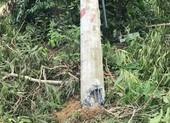 Bộ Công Thương nói về chất lượng cột điện bị gãy đổ trong bão