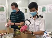 Đắt khách nhưng nông sản Việt không thể xuất khẩu