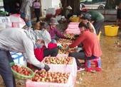 Nông nghiệp Việt cần sẵn sàng kịch bản cho 3 cuộc khủng hoảng