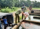 Kiên Giang tiêu hủy 3,2 tấn phân bón giả
