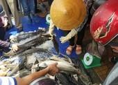 Phát hiện các hình thái cá tầm không được phép kinh doanh ở VN
