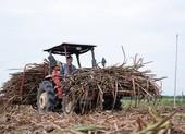 Trả lại công bằng cho ngành mía đường Việt