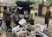 Phát hiện nhiều vụ nhập lậu cá tầm Trung Quốc