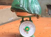 Ruồi đong bằng kg, dân chặn xe vào bãi rác Nam Sơn