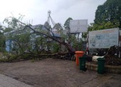 Đồng Nai: Cây phượng đổ trong sân trường, 3 nữ sinh xây xát