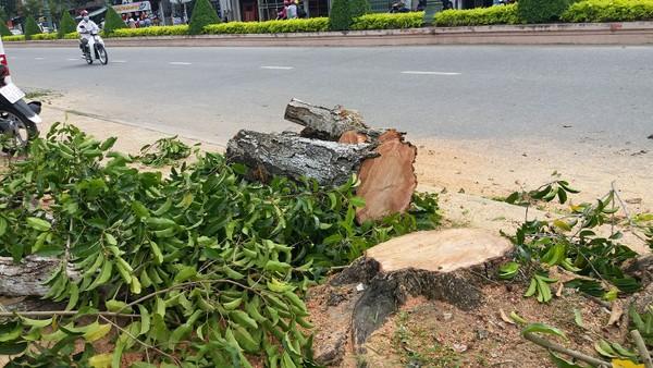 Nhiều cây bị cưa sát gốc