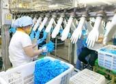 Lãi hơn 500 tỉ đồng từ găng tay y tế xuất ngoại