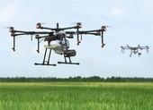 Thuê máy bay không người lái phun thuốc cho lúa vùng phong tỏa