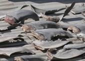 Đại sứ quán VN tại Chile lên tiếng vụ phơi vi cá mập