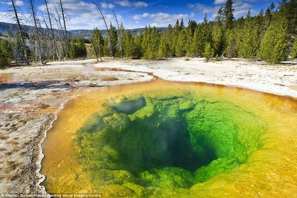 Morning Glory in the Yellowstone National Park was once a brilliant shade of blue, but now owes its yellow tinge to debris and coins thrown in over the years