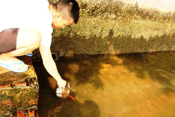 Sau khi làm lễ sẽ mang cá ra sông Sài Gòn thả