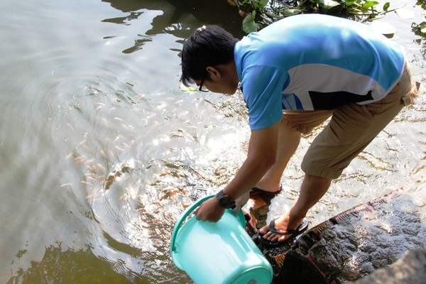 Nhiều người đã dùng xô thay cho bao ni lông đem cá ra sông thả để bảo vệ môi trường.