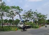 Báo sự cố cây xanh mùa mưa: Gọi 1022
