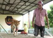 Chú chó Nhật Shiba đóng cậu Vàng trong Lão Hạc gây tranh cãi