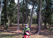 Không chuyển mục đích rừng phòng hộ giao cho dự án du lịch