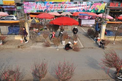 Hoa đào 'đổ bộ' xuống phố đón chào Tết