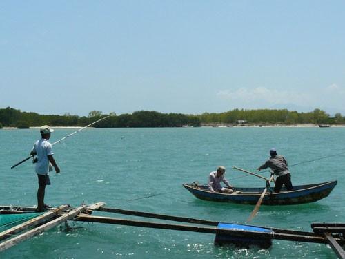 Cá mập xuất hiện tại vùng biển Khánh Hòa 3
