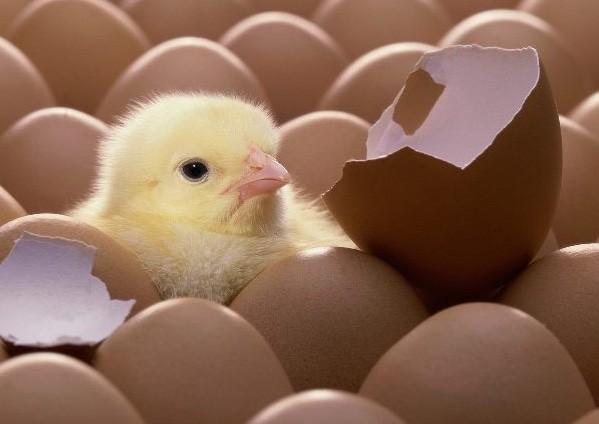 Có nên cất trứng vào trong tủ lạnh?