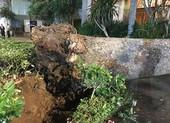 Liên tục cây xanh ngã đè trúng người ở TP.HCM