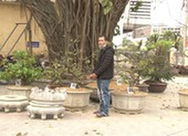Bắt kẻ trộm hàng loạt cây mai cảnh ở Huế