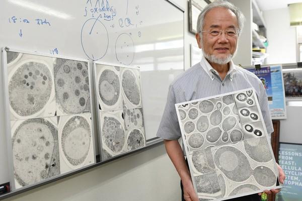Nobel Y học 2016 vinh danh nhà khoa học Nhật Yoshinori Ohsumi với cơ chế tự thực của tế bào.