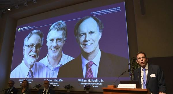 Hai nhà khoa học Mỹ và một nhà khoa học Anh được vinh danh đoạt giải Nobel Y học 2019 với phát hiện cách các tế bào cảm giác và thích nghị với oxy. Ảnh: SPUTNIK
