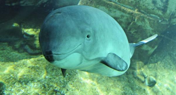 Ít nhất 18 chú cá heo quý hiếm có nguy cơ tuyệt chủng ở biển Baltic sau một đợt tập trận chung của NATO. Ảnh: SPUTNIK