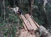 Phát hiện một vụ phá rừng quy mô lớn ở Gia Lai