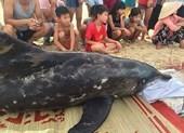 Người dân túc trực bên cá heo sau nhiều lần giải cứu bất thành